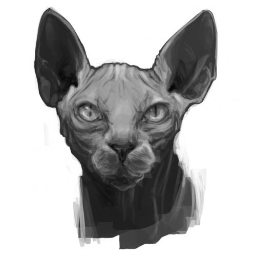 Sphynx Cat practice